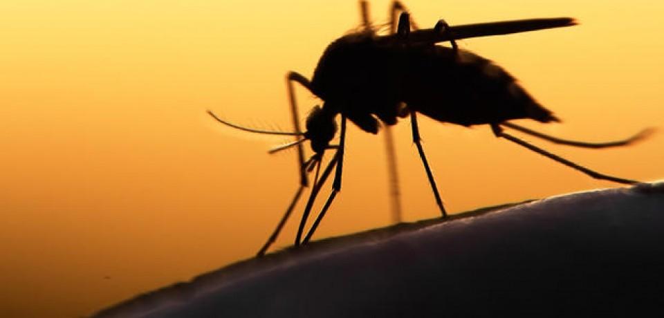 Governo da Flórida identifica mais 10 casos de zika em Miami