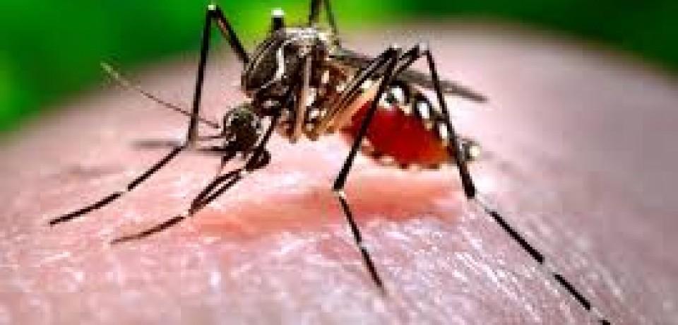 Em uma semana, PE registra 2,3 mil suspeitas de dengue e chikungunya